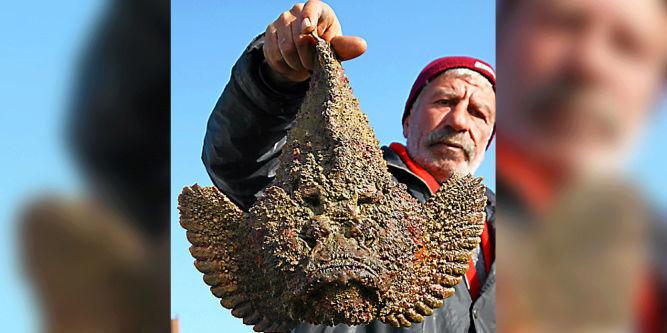 Espèces invasives : ces quatre poissons qui menacent la Méd. 16180910