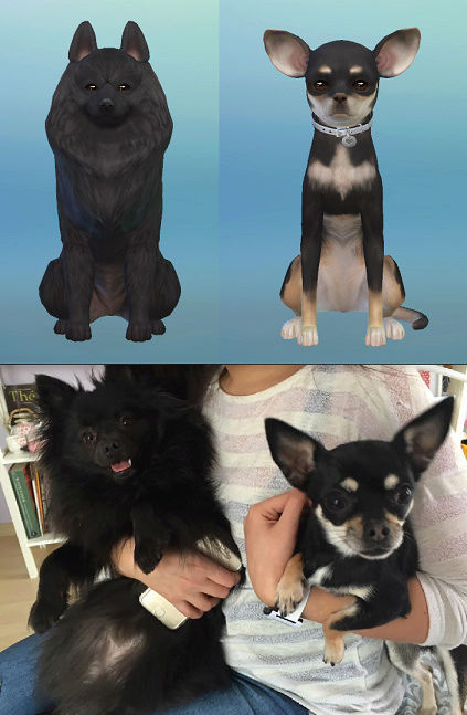 Share your real life pets vs your Sims 4 version! Dogs11