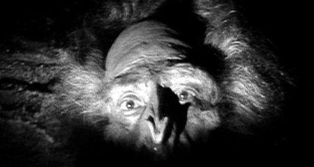 Welche Hammer Phantastikfilme der 1950er Jahre sind die Besten? - Seite 3 Absmfa10