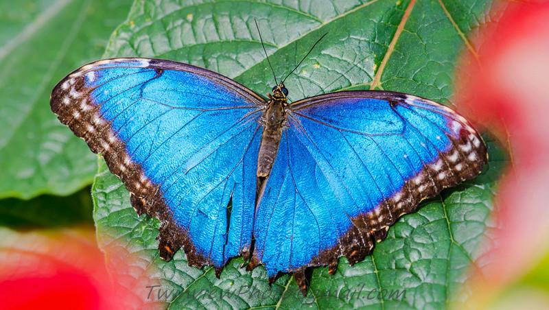 Papillon en liberté 002_1610