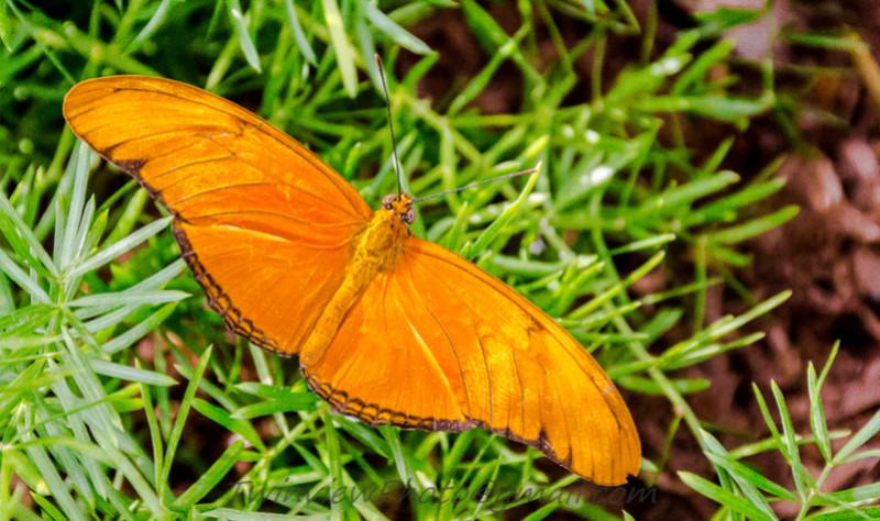 Papillon en liberté 002_1612