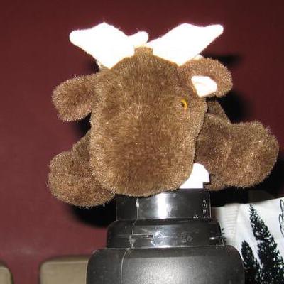 [ACTUEL] Moose 200711