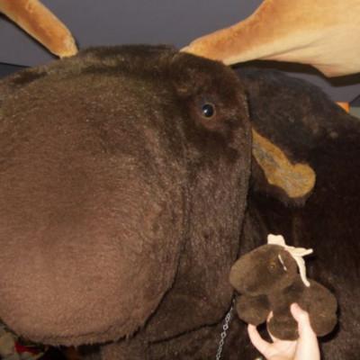 [ACTUEL] Moose 201112