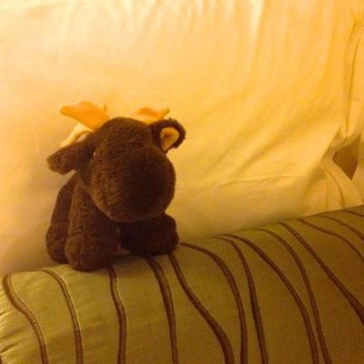 [ACTUEL] Moose 201212