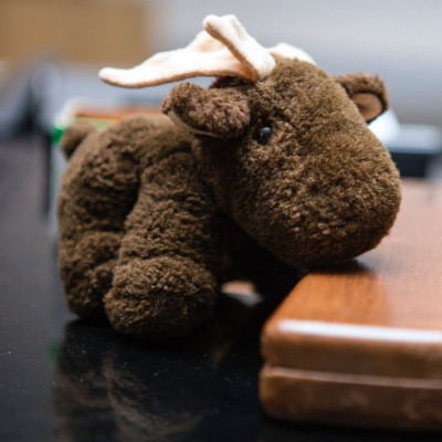 [ACTUEL] Moose 201723