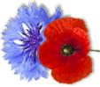 poppy-10.jpg