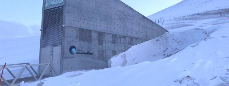 Le grenier de la planète fête ses 10 ans : près d'un million de graines conservées sous la glace 14553010