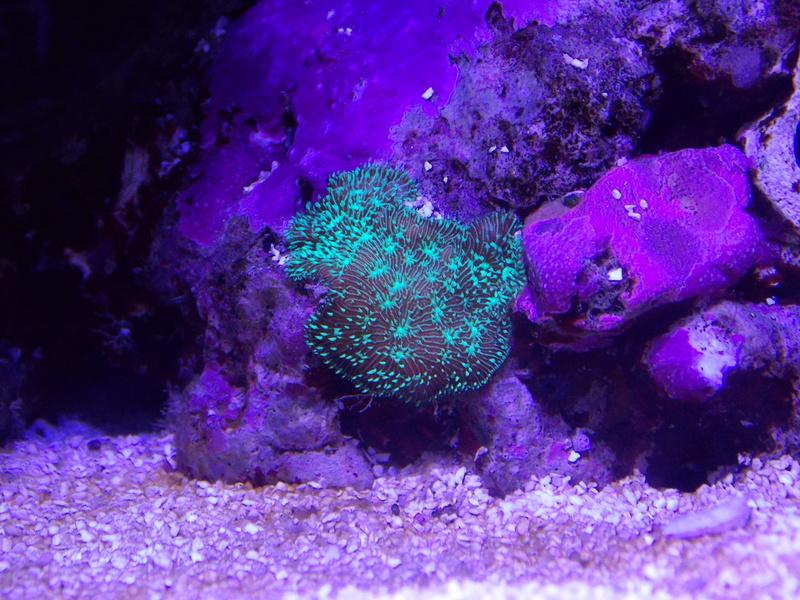 identification corail Dscn0312