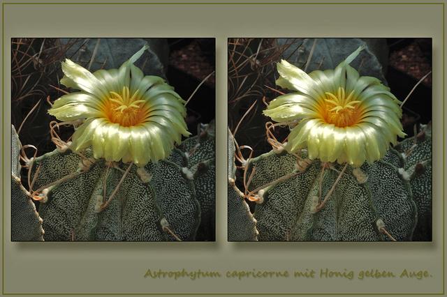 Stereoskopie - Seite 5 Astrop13