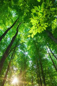 Forêt tropicale à l'Ouest