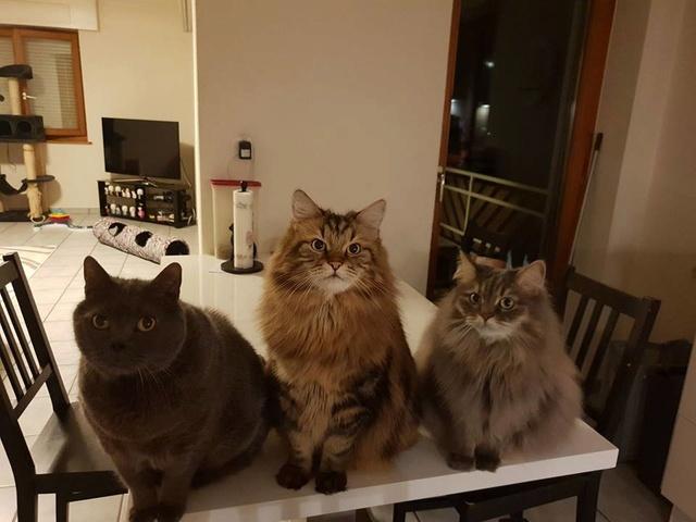 Azur, Gibbs et Gaïa Mes_bb10