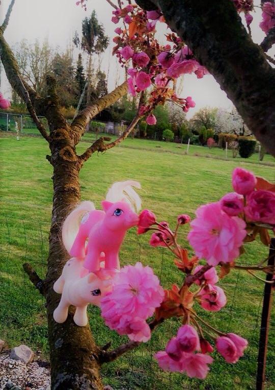 [Concours Avril] Le rose ... Bravo Abekei! Image46