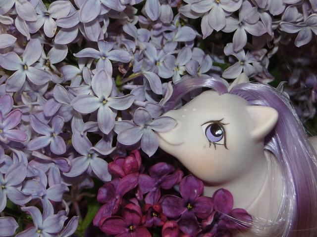 [Concours Mai] Le violet ... Bravo elsanna17! Image47
