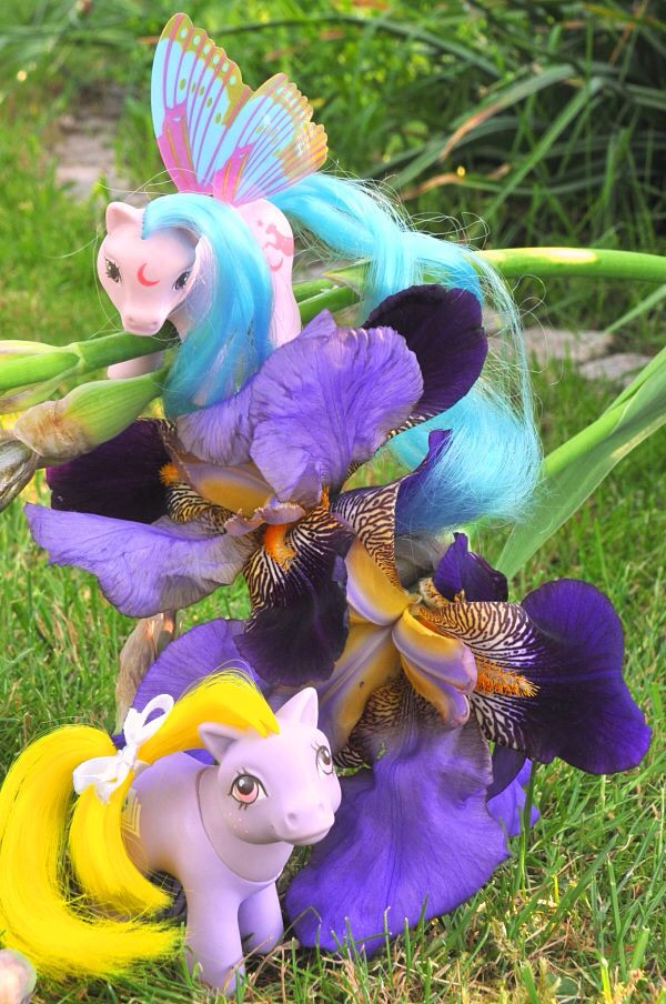 [Concours Mai] Le violet ... Bravo elsanna17! Image52