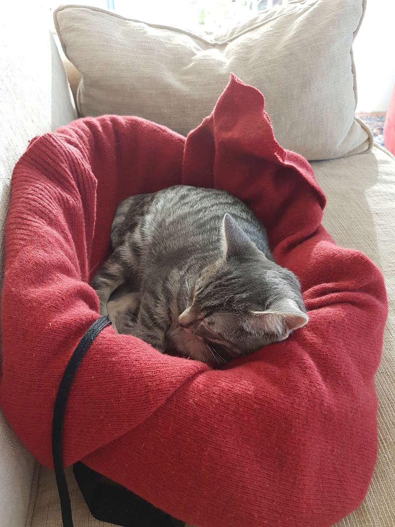 NIET, chatonne tigrée, née le 22/05/17 20171011