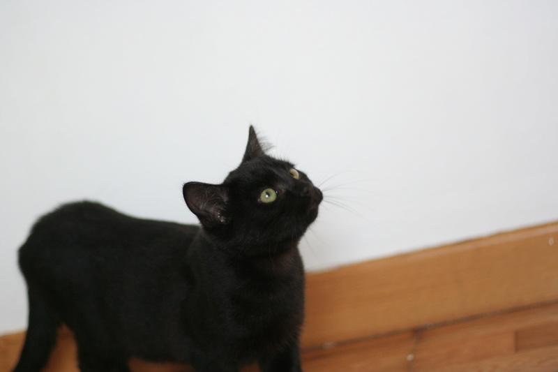 NYSSA, chatonne noire, née le 25/05/17 Img_0014