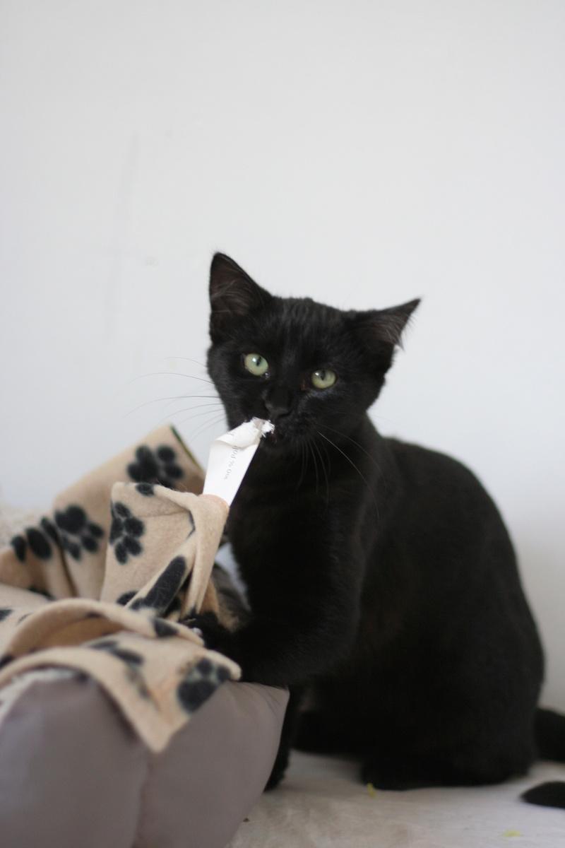 NYSSA, chatonne noire, née le 25/05/17 Img_0015