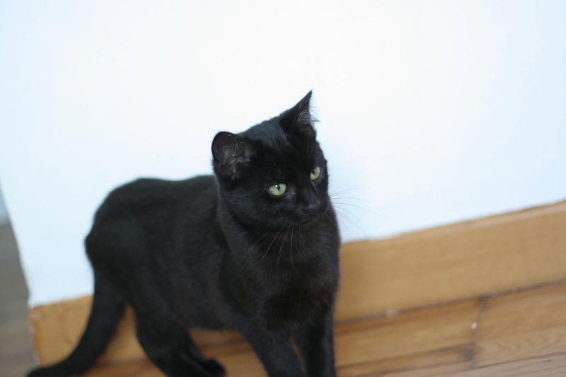 NYSSA, chatonne noire, née le 25/05/17 Img_0016