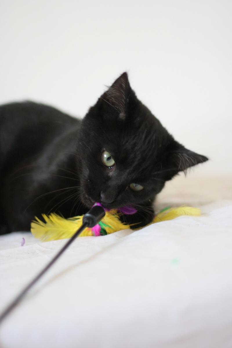 NYSSA, chatonne noire, née le 25/05/17 Img_0114