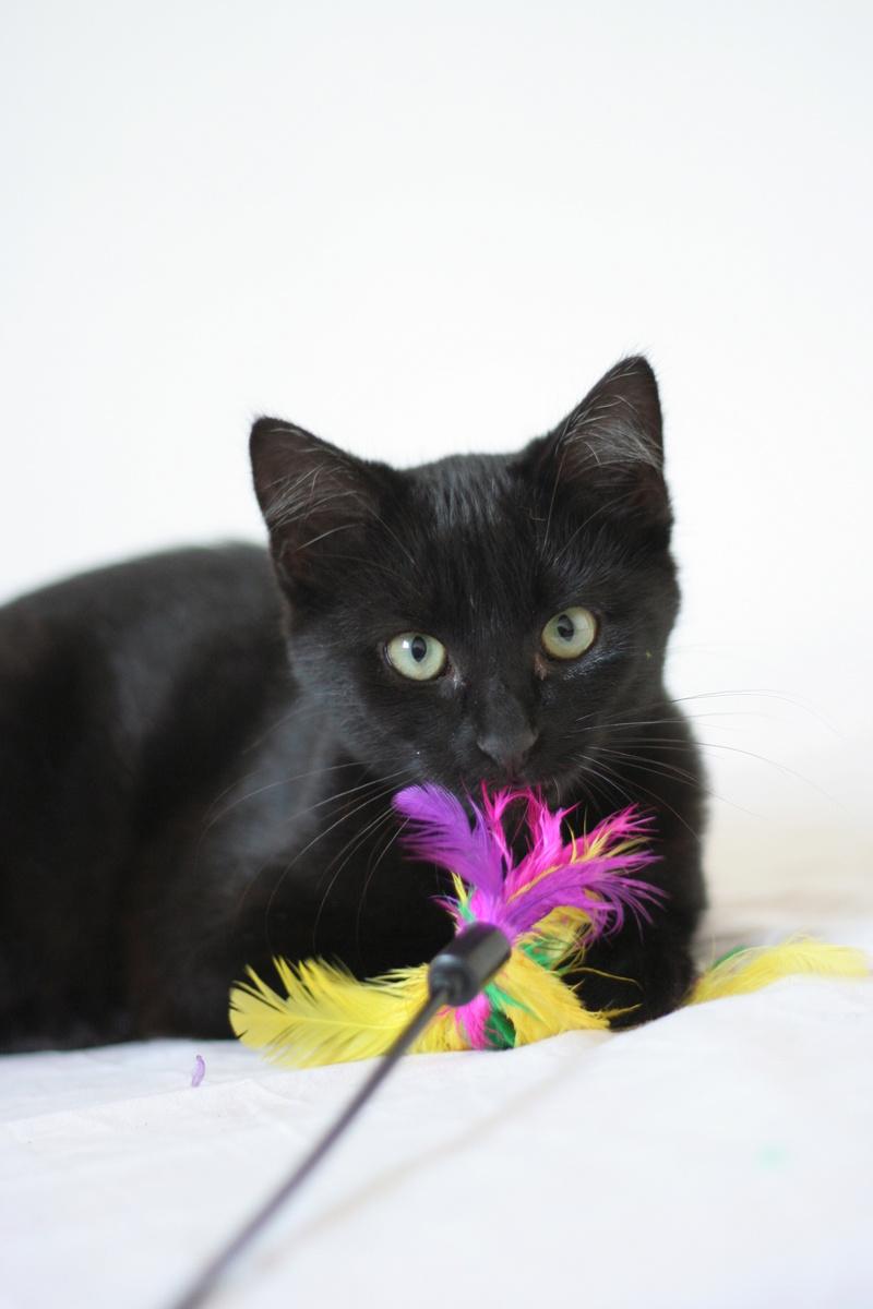 NYSSA, chatonne noire, née le 25/05/17 Img_0115