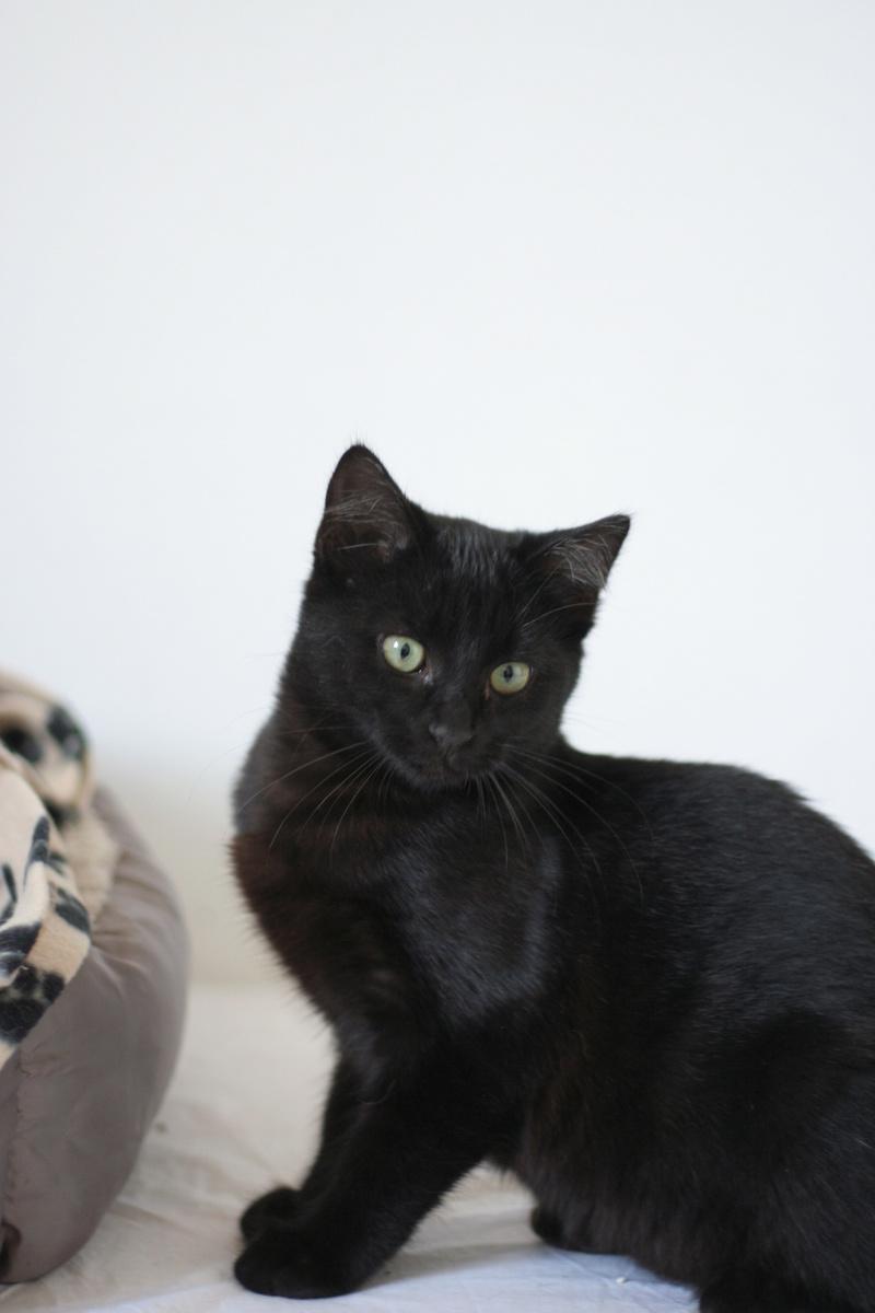 NYSSA, chatonne noire, née le 25/05/17 Img_0116