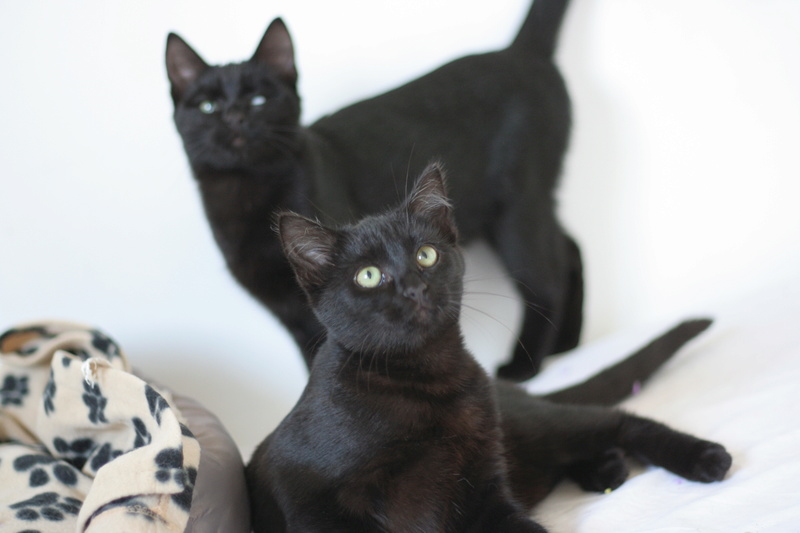 NYSSA, chatonne noire, née le 25/05/17 Img_0117