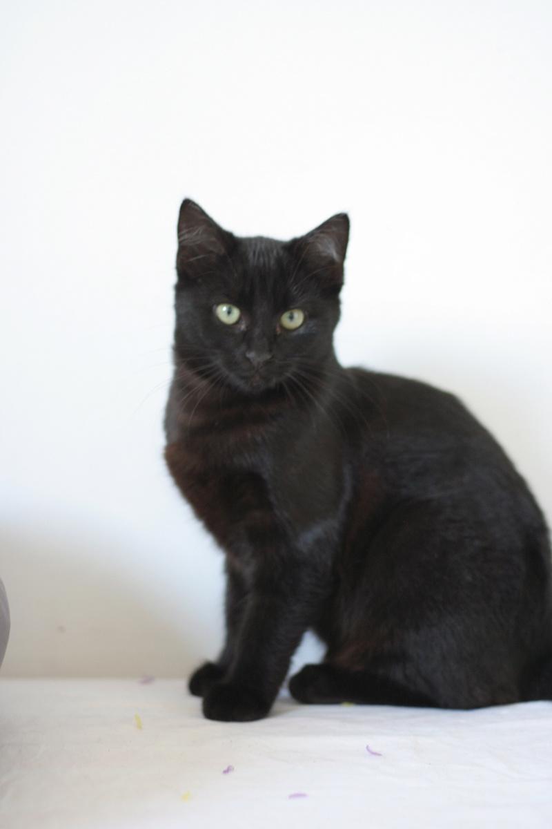 NYSSA, chatonne noire, née le 25/05/17 Img_0118