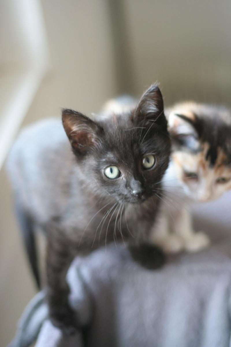 NABYSSA, chatonne noire, née le 08/09/17 Img_0220