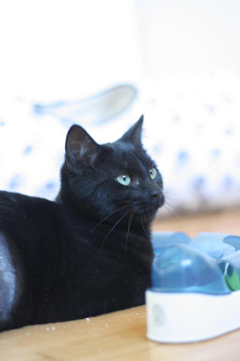 NYSSA, chatonne noire, née le 25/05/17 Img_0421