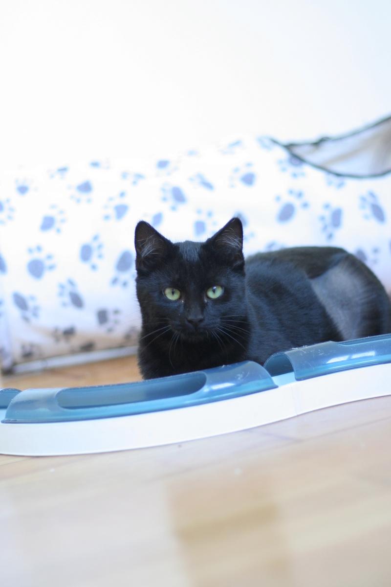 NYSSA, chatonne noire, née le 25/05/17 Img_0422