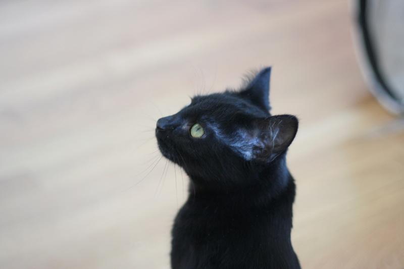 NYSSA, chatonne noire, née le 25/05/17 Img_0423