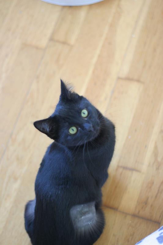 NYSSA, chatonne noire, née le 25/05/17 Img_0424