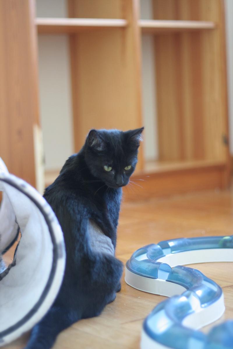 NYSSA, chatonne noire, née le 25/05/17 Img_0425