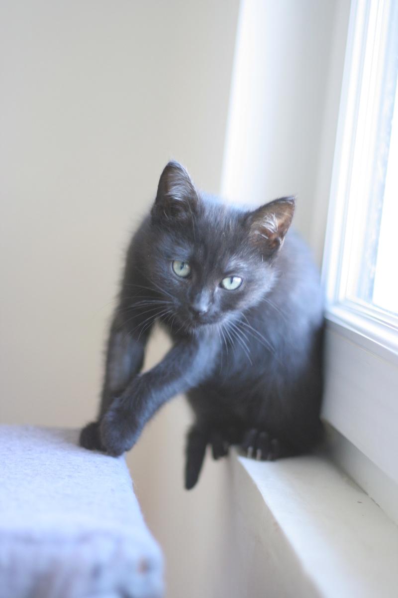 NABYSSA, chatonne noire, née le 08/09/17 Img_0428