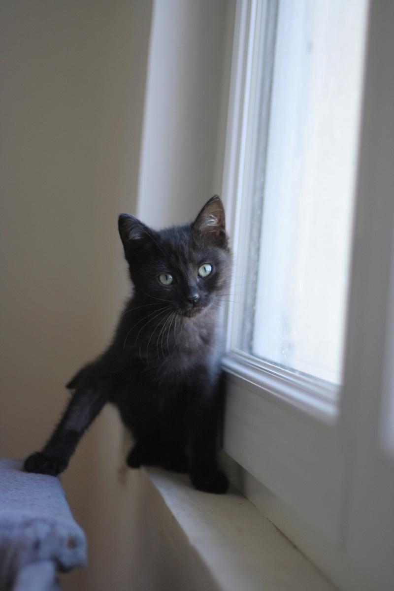 NABYSSA, chatonne noire, née le 08/09/17 Img_0429