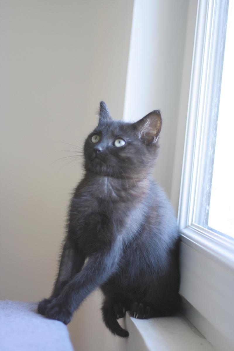NABYSSA, chatonne noire, née le 08/09/17 Img_0430