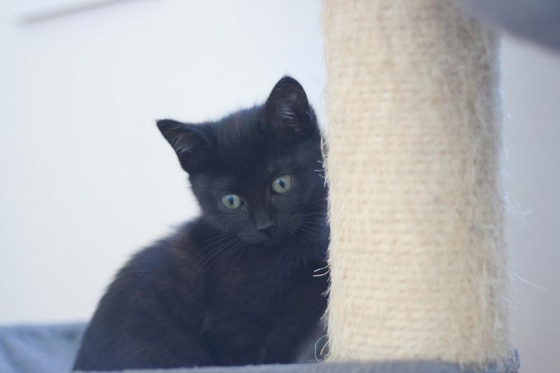 NABYSSA, chatonne noire, née le 08/09/17 Img_0431