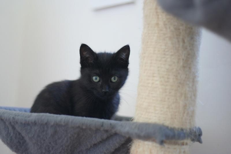 NABYSSA, chatonne noire, née le 08/09/17 Img_0432