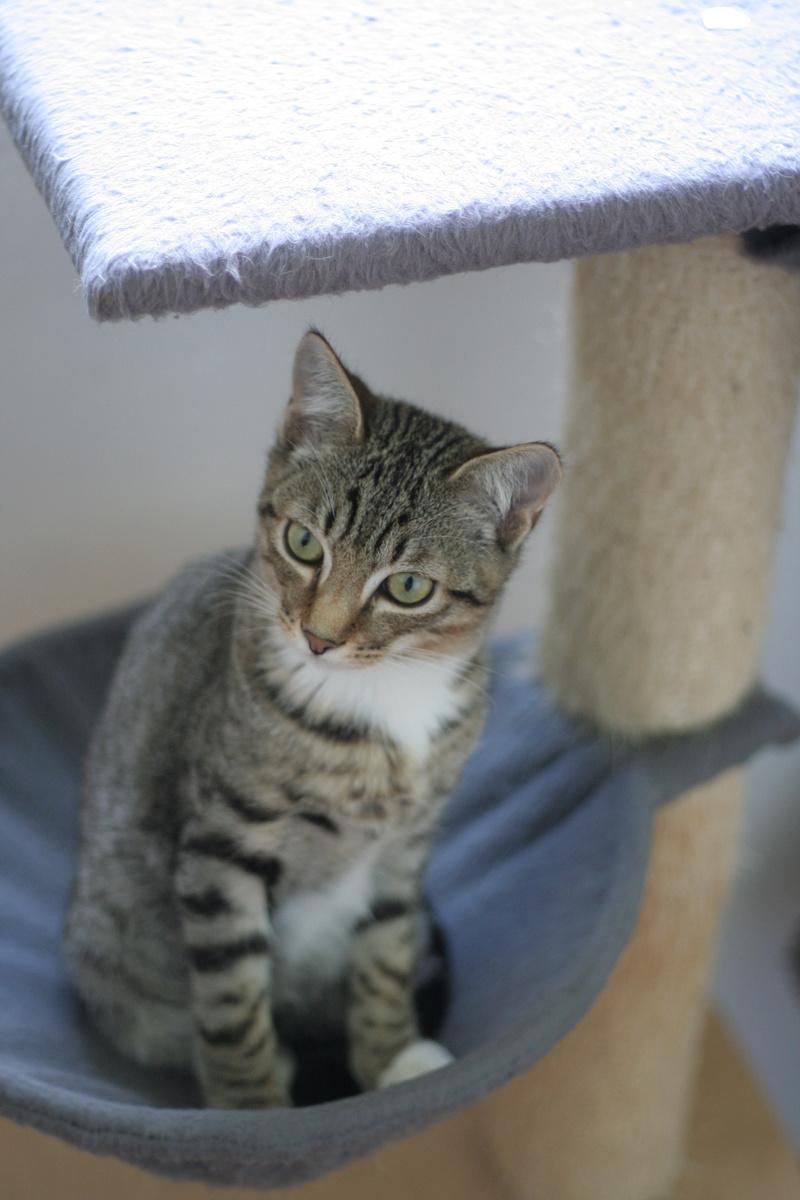 niro - NIRO, chaton mâle tigré, né le 22/05/17 Img_9619