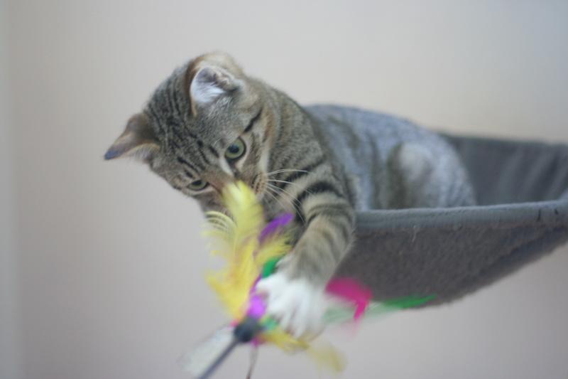 niro - NIRO, chaton mâle tigré, né le 22/05/17 Img_9712