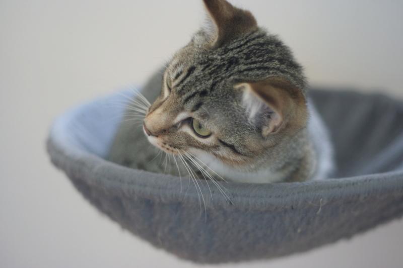niro - NIRO, chaton mâle tigré, né le 22/05/17 Img_9713