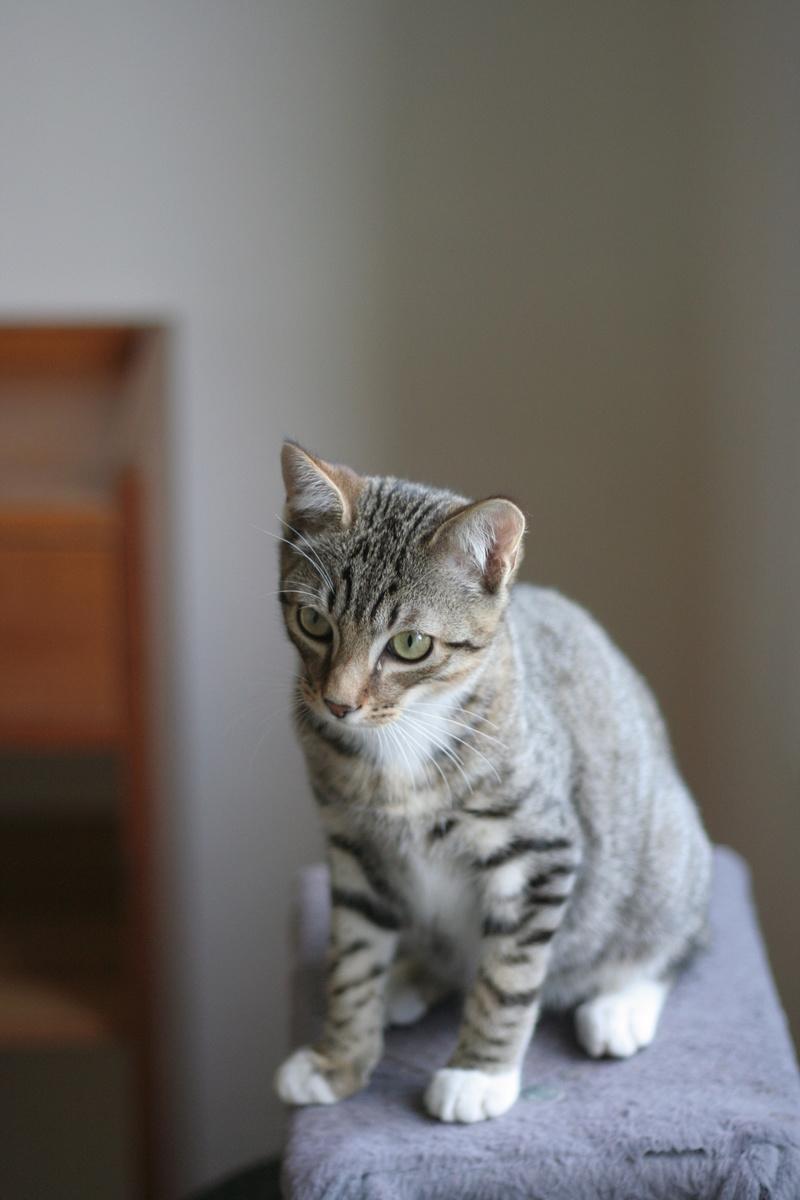 niro - NIRO, chaton mâle tigré, né le 22/05/17 Img_9714
