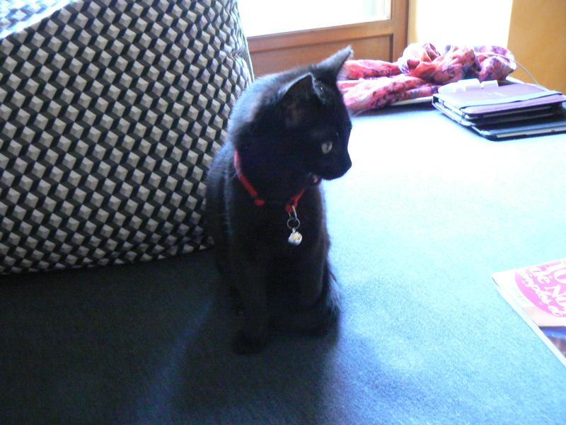NABYSSA, chatonne noire, née le 08/09/17 Nabyss10