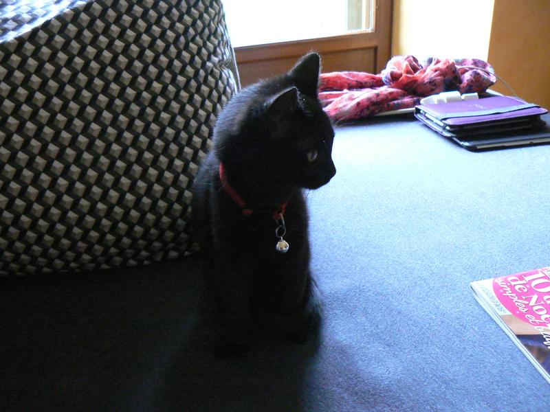 NABYSSA, chatonne noire, née le 08/09/17 Nabyss11