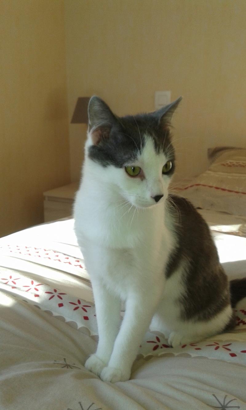 nolo - NOLO, chaton européen gris & blanc, né le 15/08/17 Nolo_510