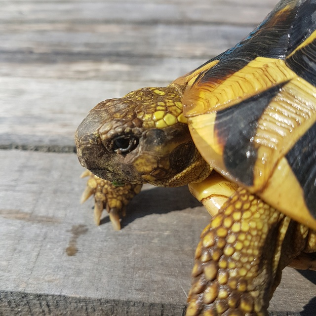 identification de ma tortue 20180513