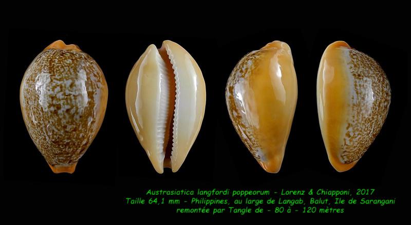 Austrasiatica langfordi poppeorum - Lorenz & Chiapponi, 2017  Langfo11