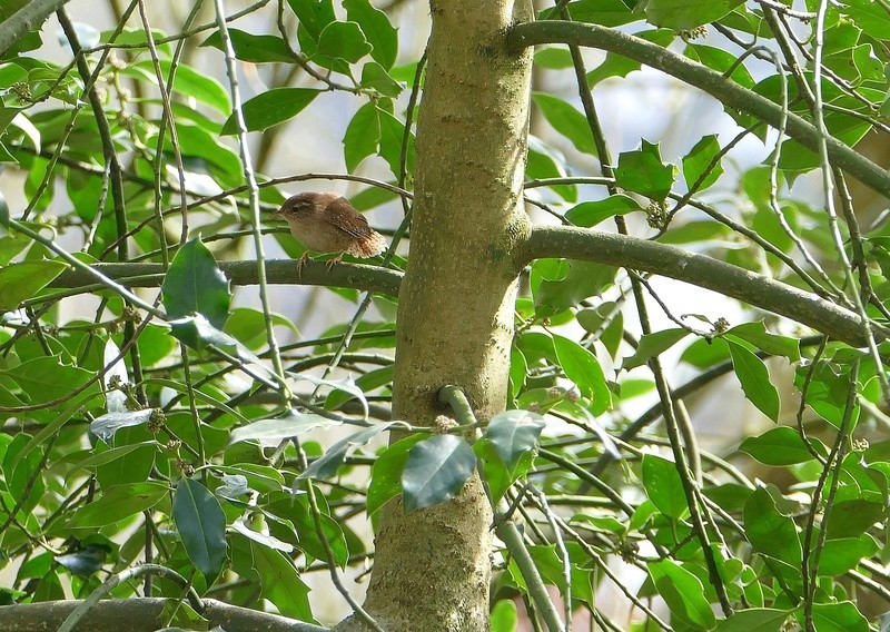Quelques oiseaux  P1370010
