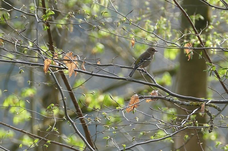 Quelques oiseaux  P1370011