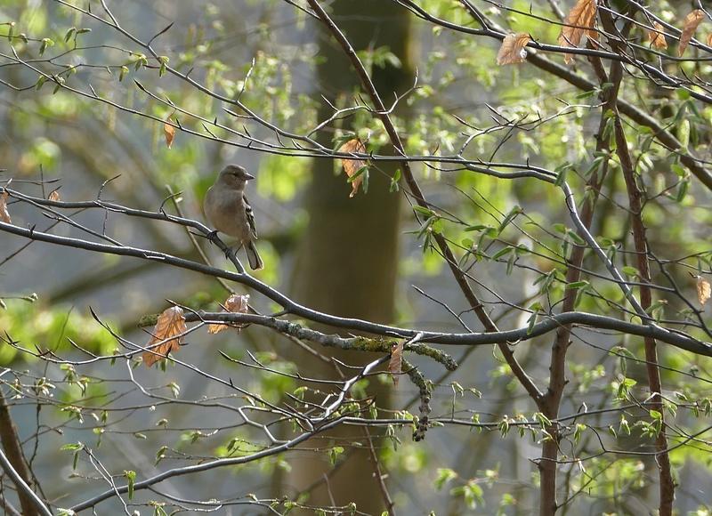 Quelques oiseaux  P1370012
